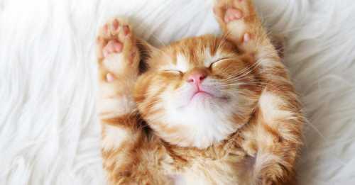 Если вы любите днём вздремнуть, обязательно прочтите эту статью