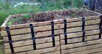 Выращивание пампасной травы: технология посева,