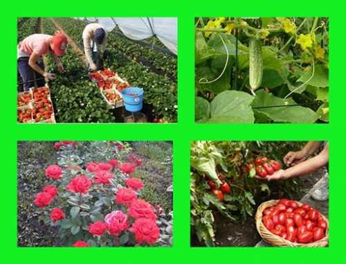 Как защитить свой сад от вредителей